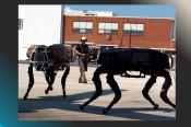 Robot BigDog